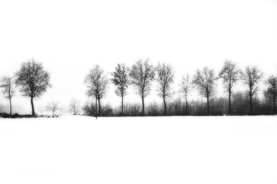 Winter Photograph - Winter Bareness by Silvia Ganora