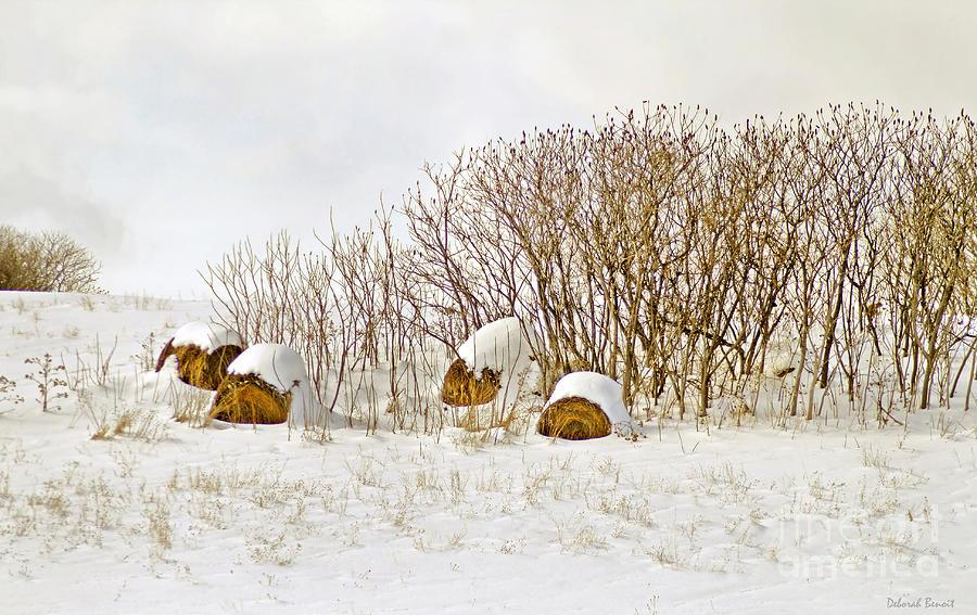 Hay Photograph - Winter Beauty by Deborah Benoit