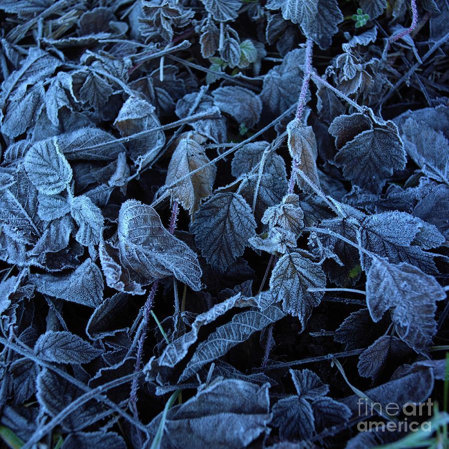 Abundance Photograph - Winter by Bernard Jaubert
