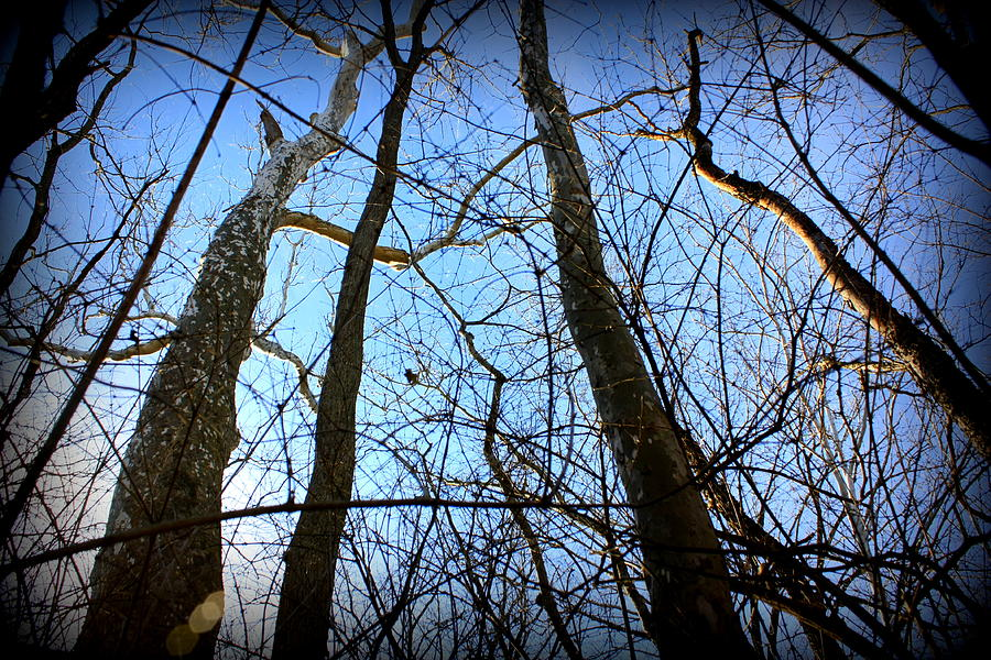 Sunset Photograph - Winter Birch by Mary Collins