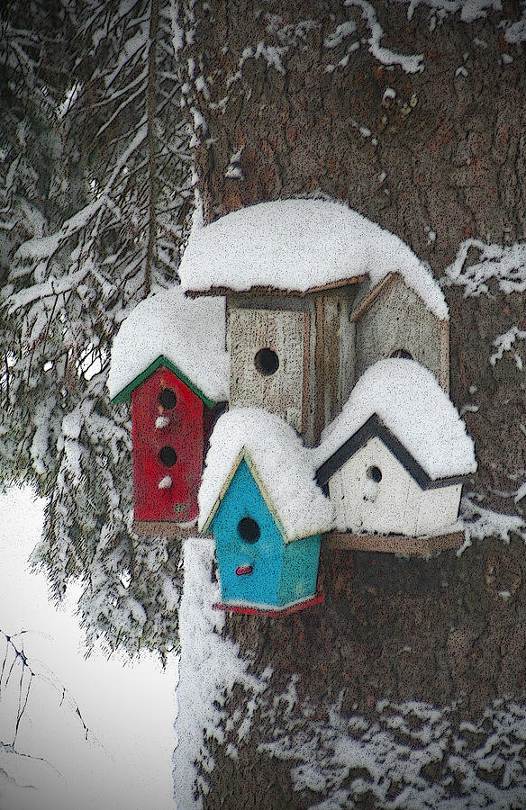 Winter Photograph - Winter Birdhouses by Tim Nyberg