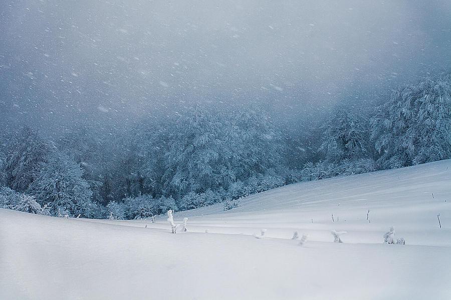 Fog Photograph - Winter Blizzard by Evgeni Dinev