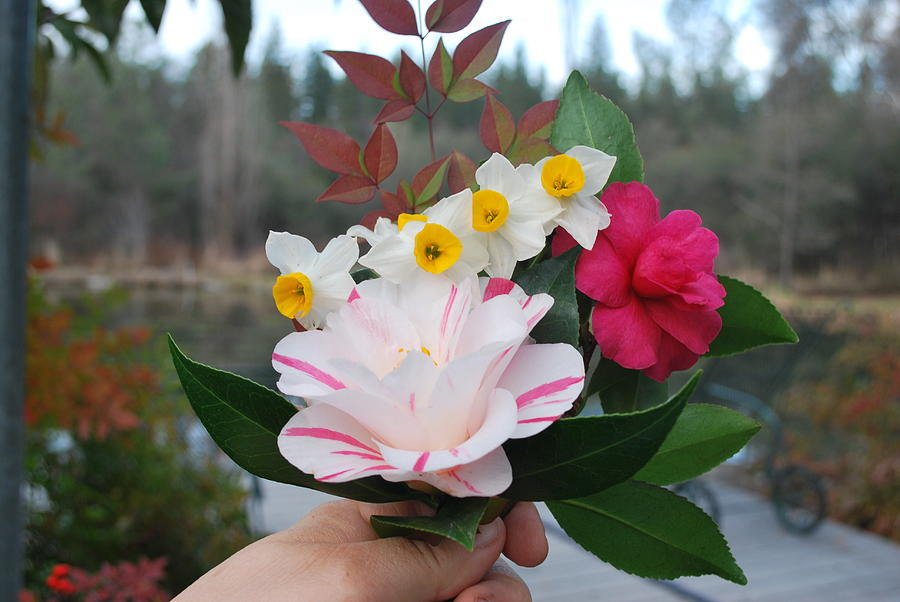 Camellia Photograph - Winter Boquet by Linda Sramek