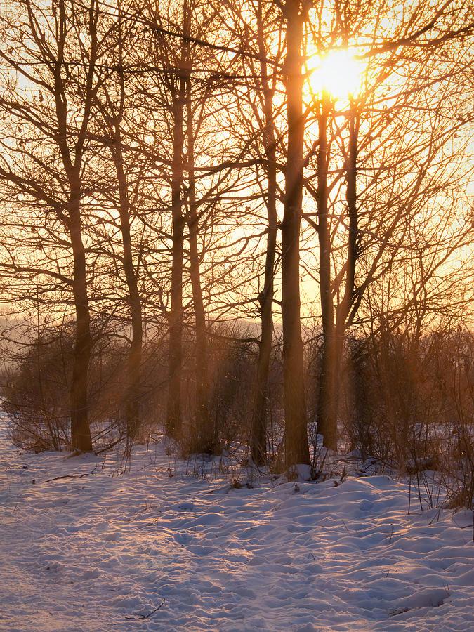 Sun Photograph - Winter Break by Wim Lanclus