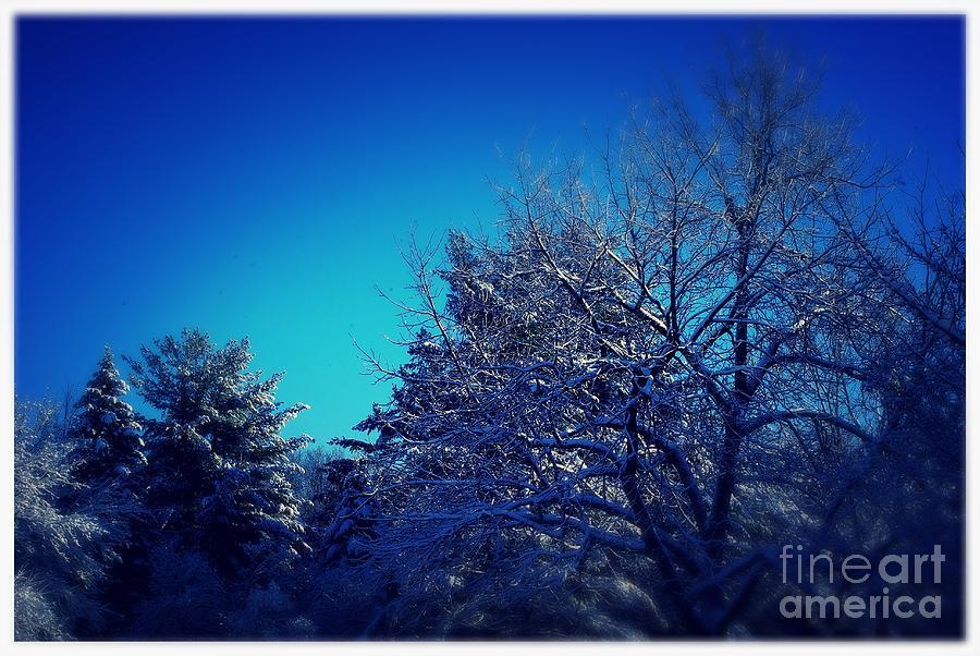 Winter Breeze Blue Photograph
