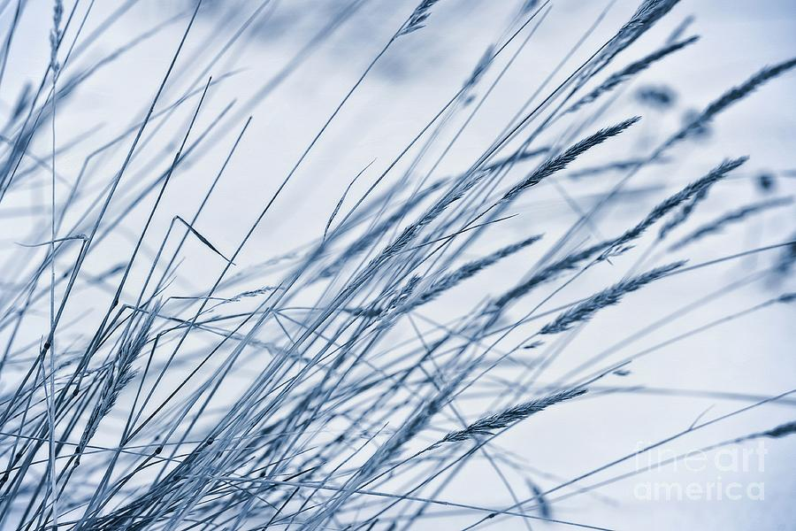 Breeze Photograph - Winter Breeze by Priska Wettstein