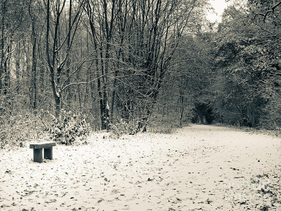 Countryside Photograph - Winter Bridleway by Andy Smy
