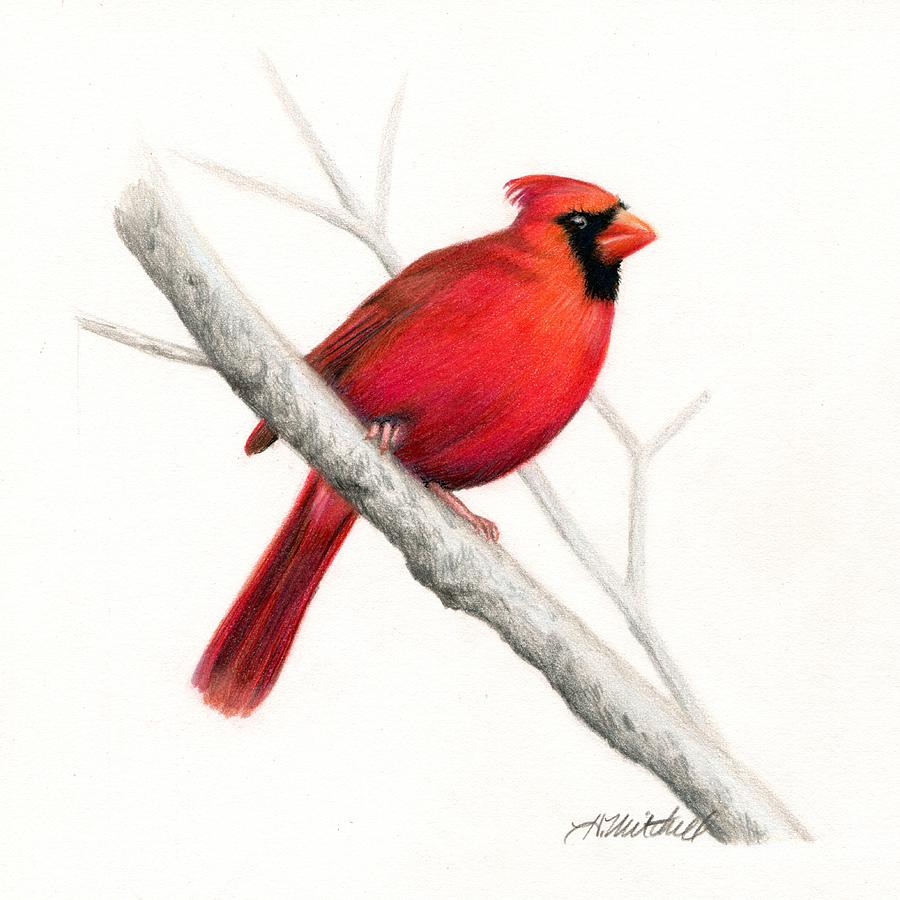 winter cardinal bird drawing by heather mitchell