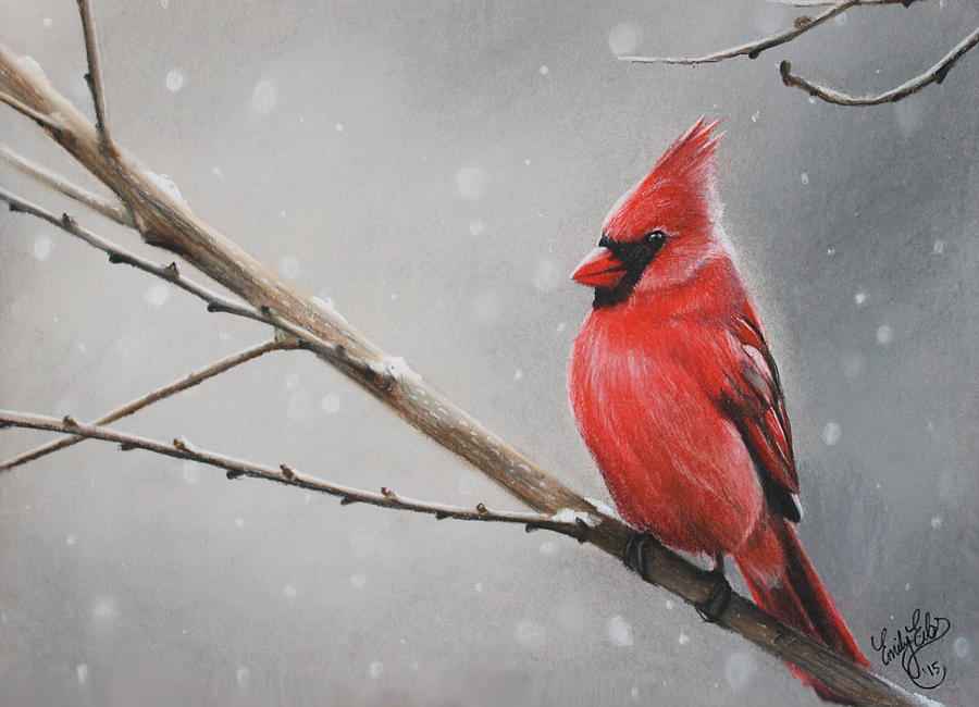 3e459cb0 Winter Cardinal by Emily Eibs