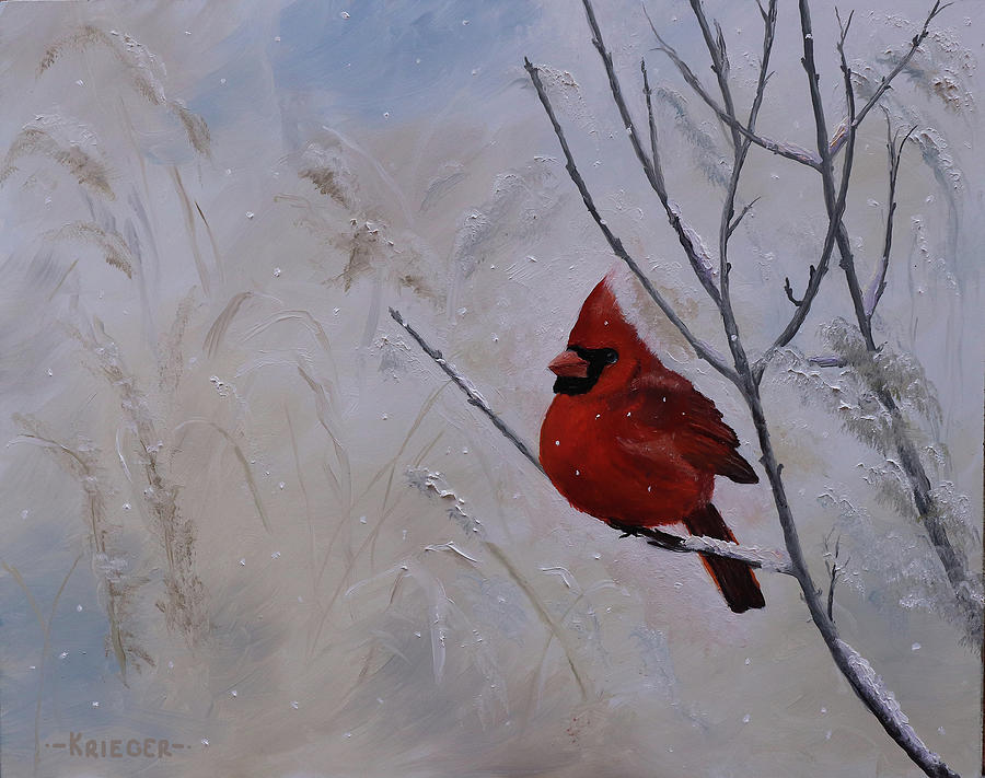 Winter Cardinal by Stephen Krieger