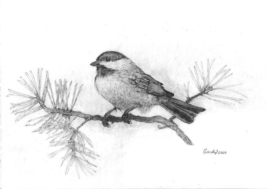 Chickadee Drawing - Winter Chickadee by Cynthia  Lanka