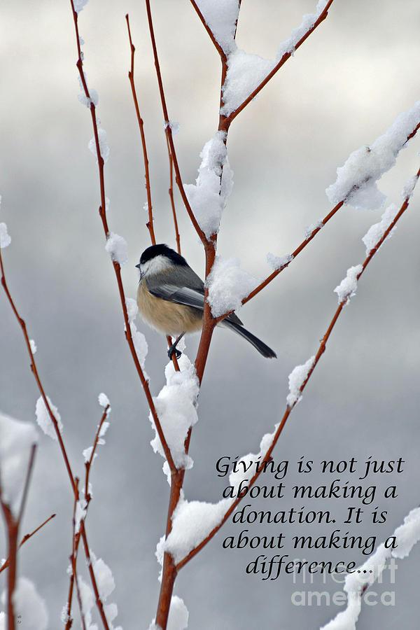 Winter Chickadee Giving Photograph