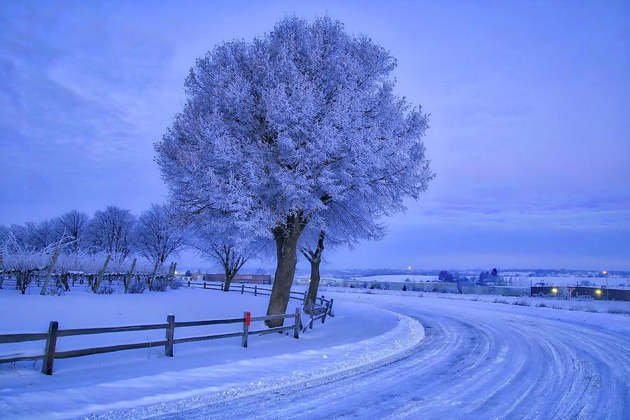 Winter Chill Photograph - Winter Chill by Lynn Hopwood