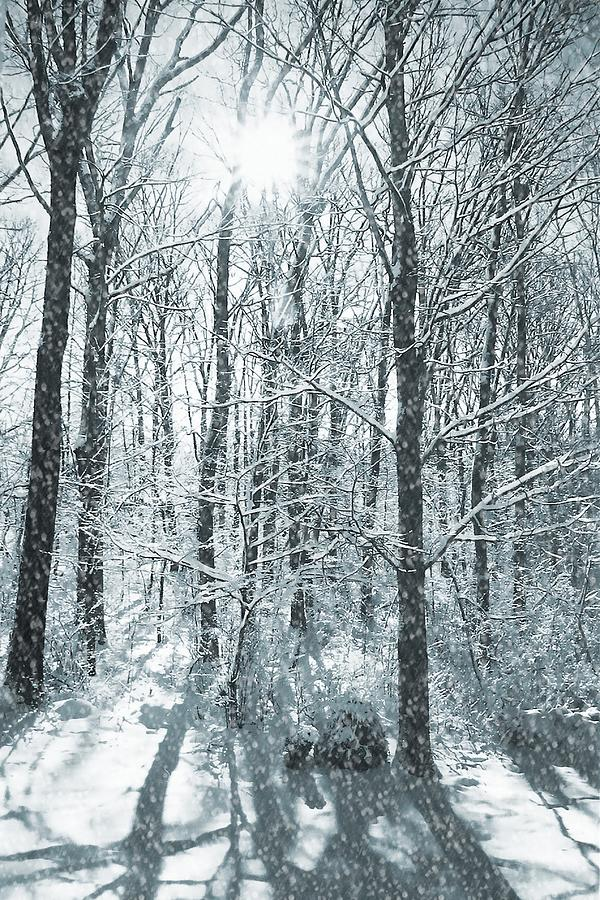 Winter Photograph - Winter Cold by JAMART Photography