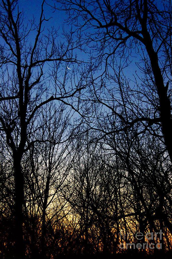 Winter Crescent Moon Photograph