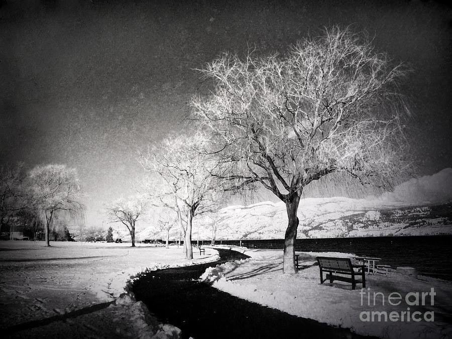 Trees Photograph - Winter Darkness by Tara Turner
