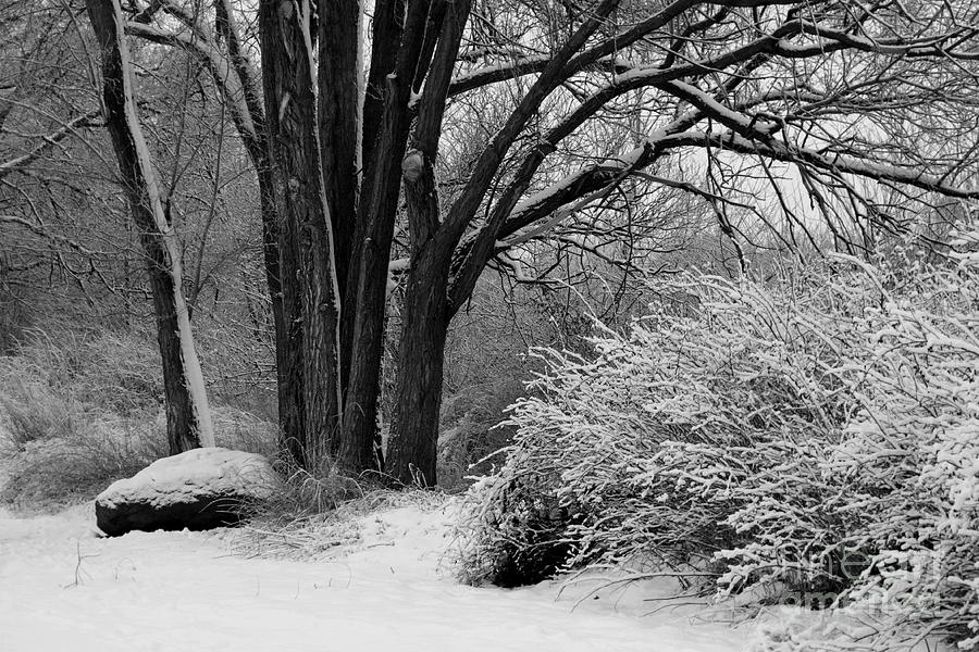 Snowy landscape photograph winter day black and white by carol groenen
