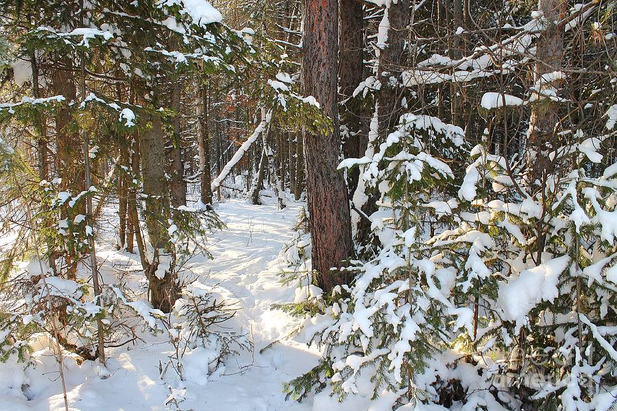Winter Day In The Woods. Photograph
