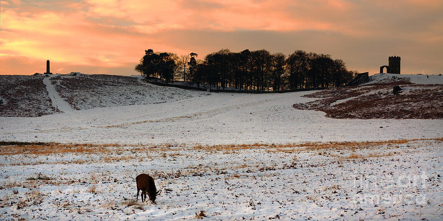 Winter Dusk At Bradgate Park Photograph By Linsey Williams