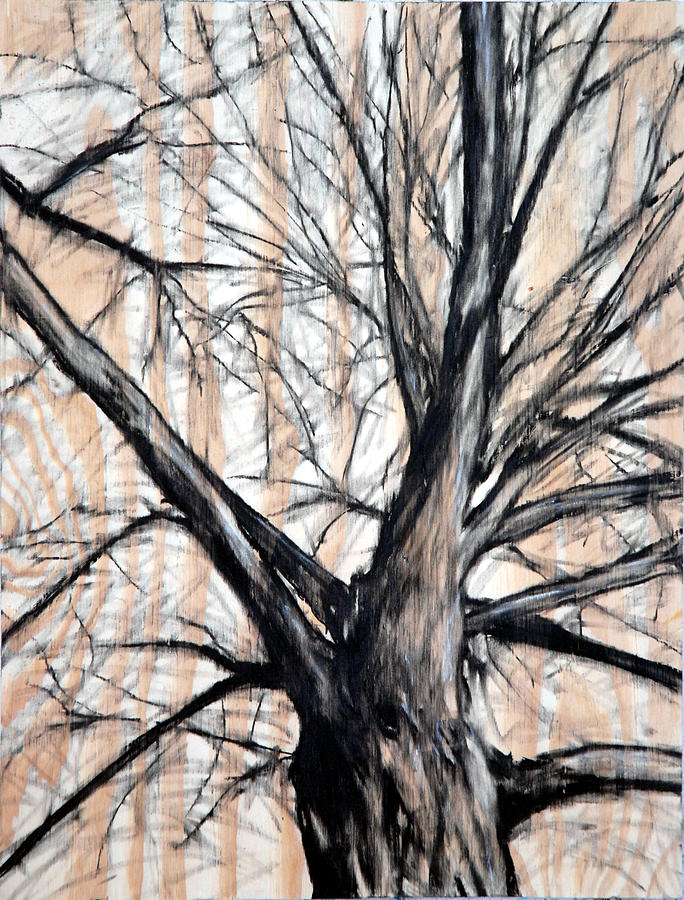 Tree Drawing - Winter Elm by John Terwilliger
