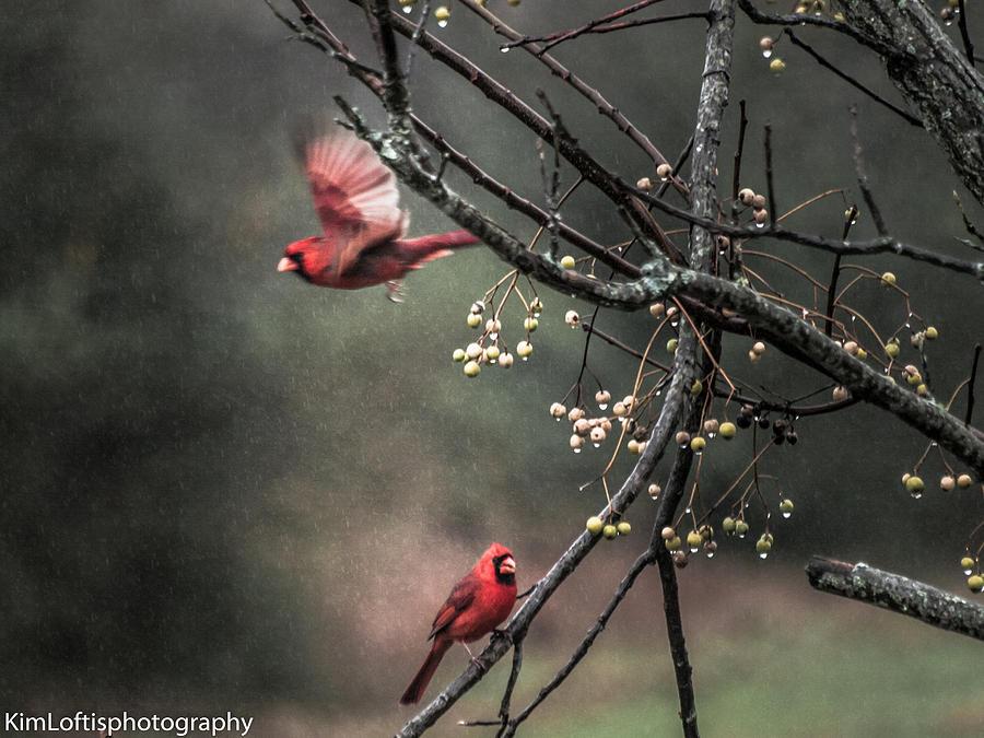 Rain Photograph - Winter Flight  by Kim Loftis
