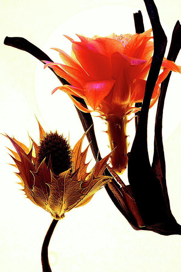 Floral Composition With Flower Of Cactus. Photograph