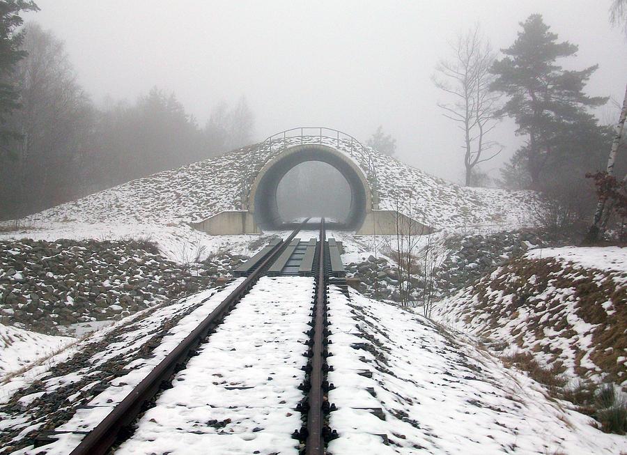 Germany Photograph - Winter Fog by Jason Girard