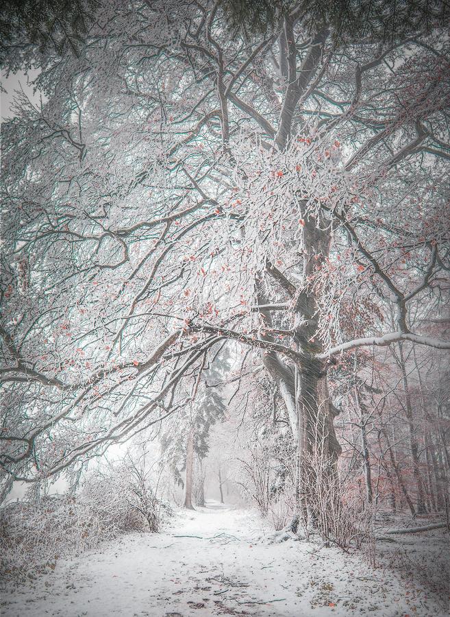 Winter Pyrography - Winter forest by Joost Lagerweij
