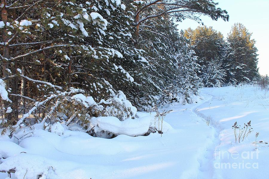 Winter Forest. Photograph