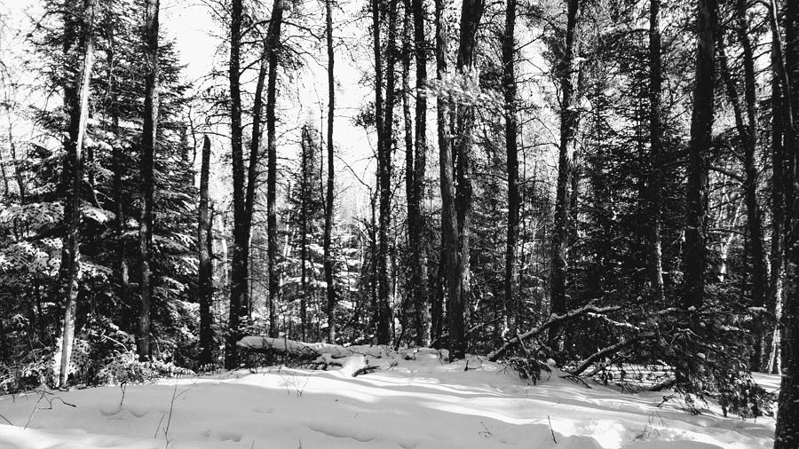 Winter Forest Paradise by Sharilee Swaity