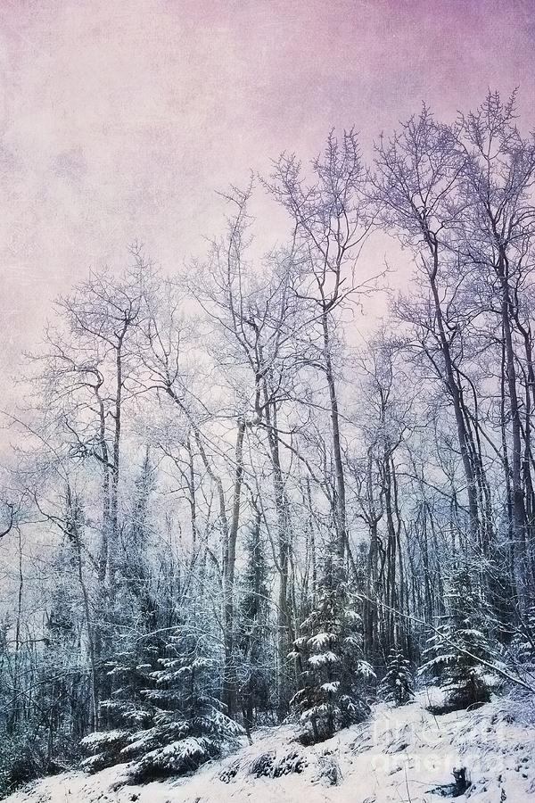 Forest Photograph - Winter Forest by Priska Wettstein