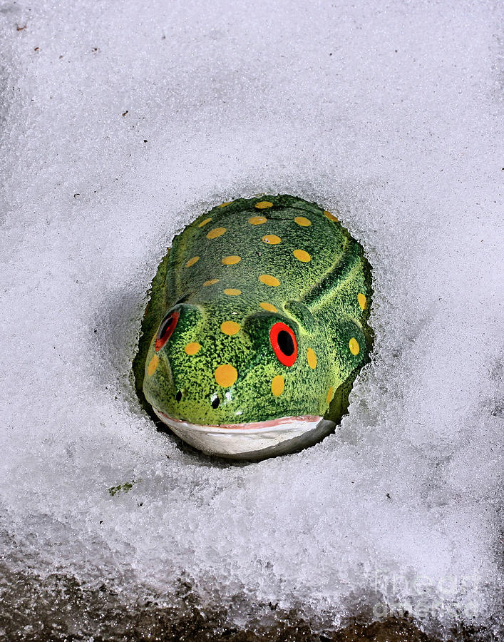 Frogs Photograph - Winter Frog by Smilin Eyes  Treasures