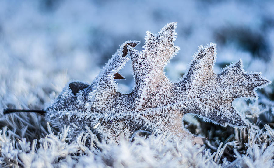 Winter Frost by Parker Cunningham