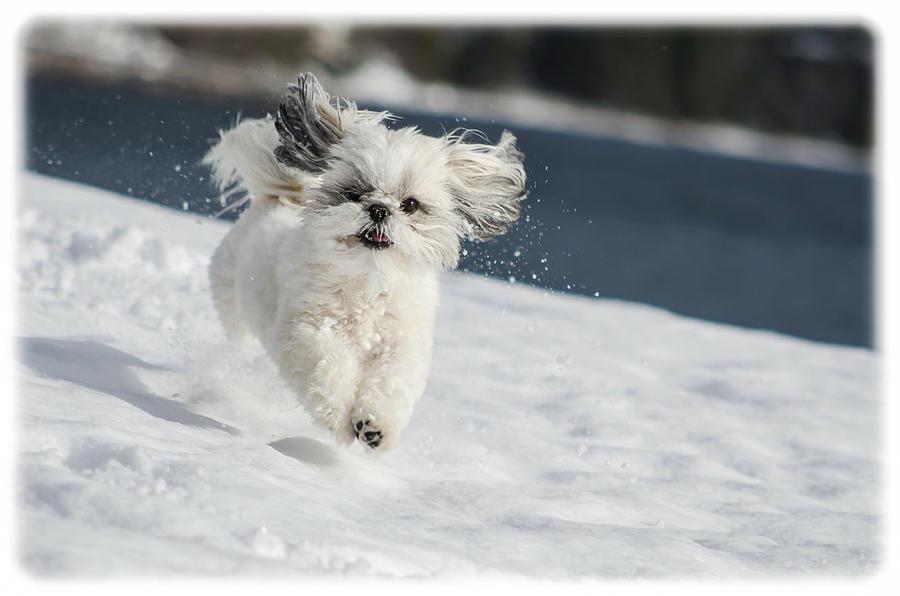 Winter Photograph - Winter Fun by Joy McAdams