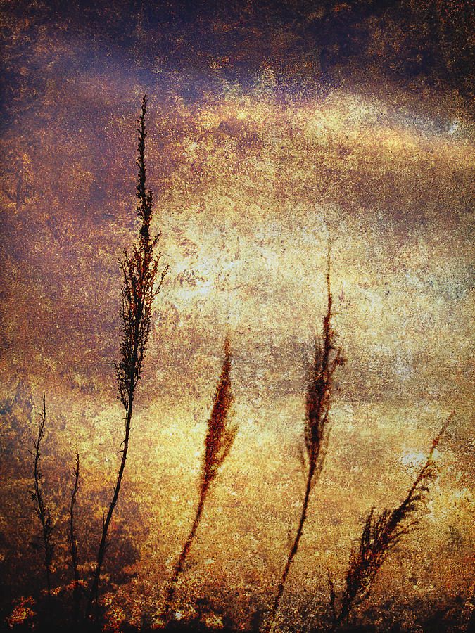 Abstract Photograph - Winter Gold by Skip Nall