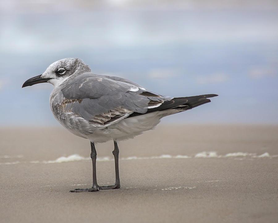 Seagull Photograph - Winter Gull by Betsy Knapp