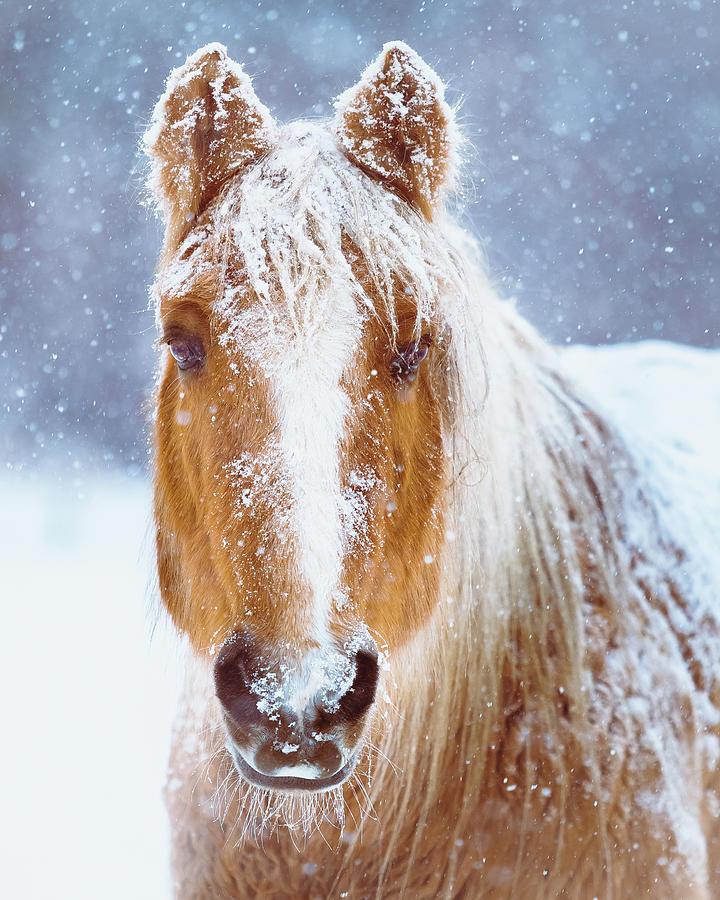 Winter Horse Portrait Photograph