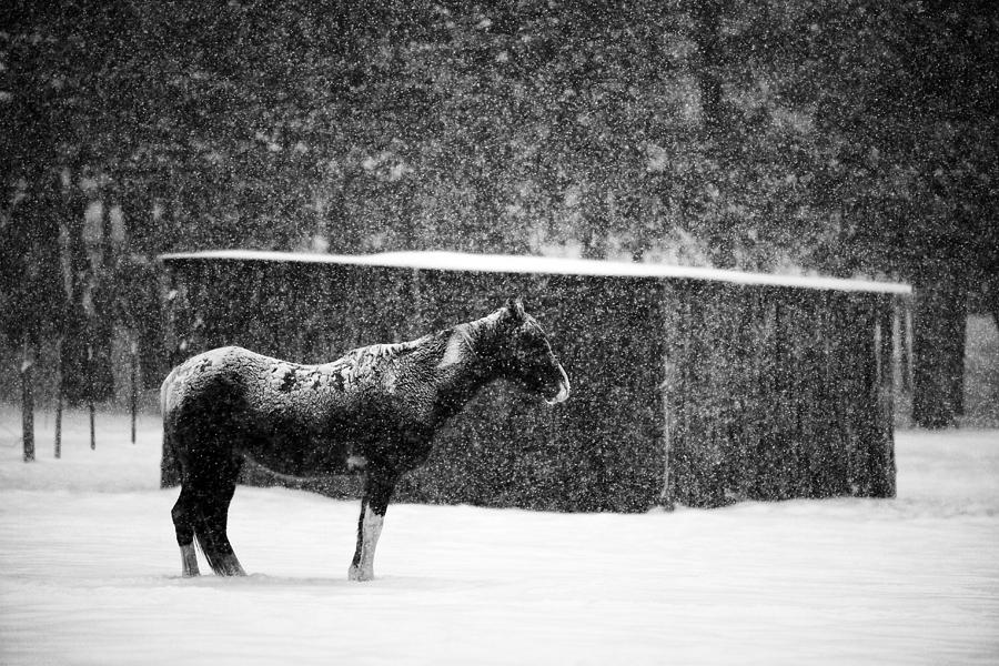 Horse Photograph - Winter Horse Shed by Mark Courage