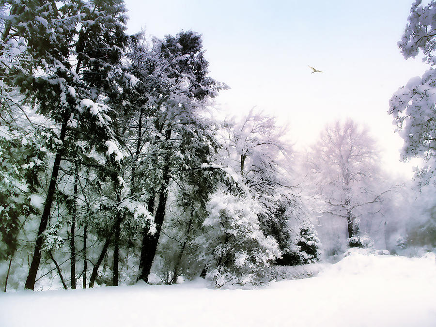 Winter Photograph - Winter Impressions by Jessica Jenney