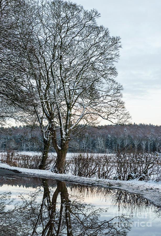 Winter Photograph - Winter In England, Uk by Amanda Elwell