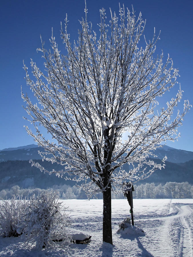 Winter Photograph - Winter In Innsbruck by Hartmut Knisel