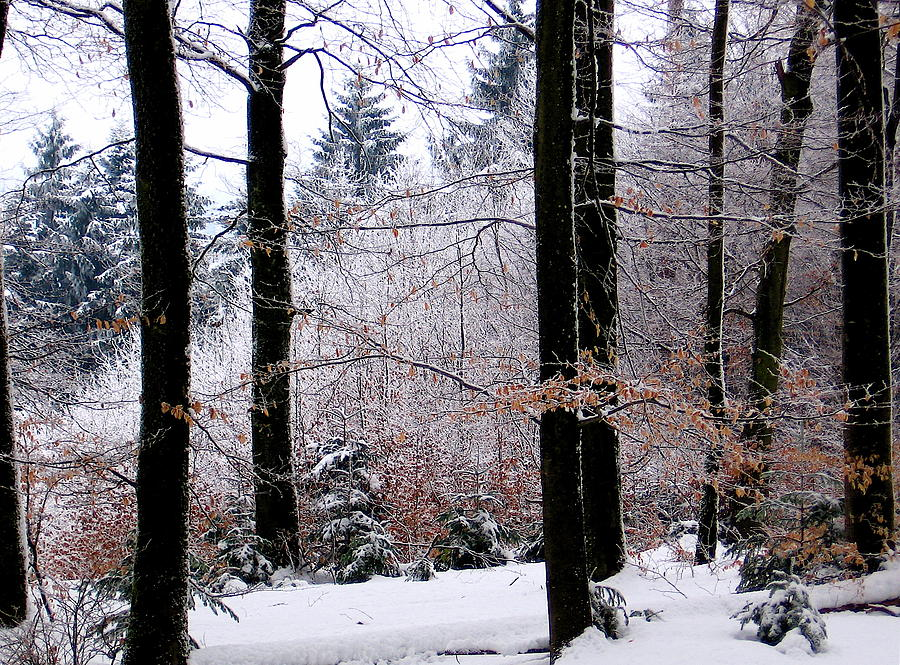 Winter Photograph - Winter In Krauchthal II by David Ritsema