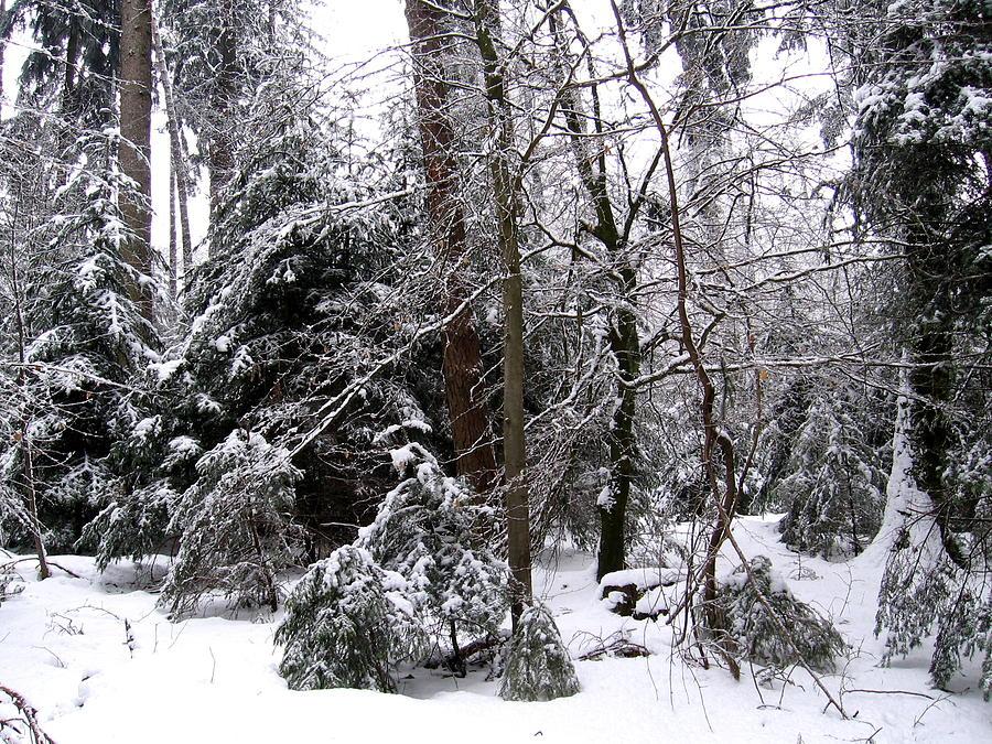 Winter Photograph - Winter In Krauchthal IIi by David Ritsema