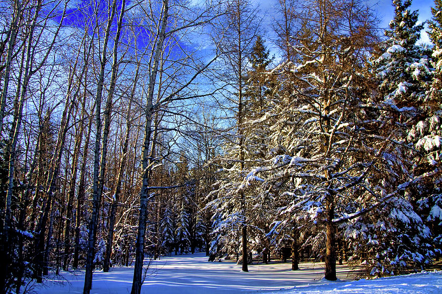 Snow Photograph - Winter In Maine by Gary Smith