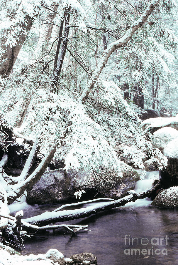 Virginia Photograph - Winter In Shenandoah by Thomas R Fletcher