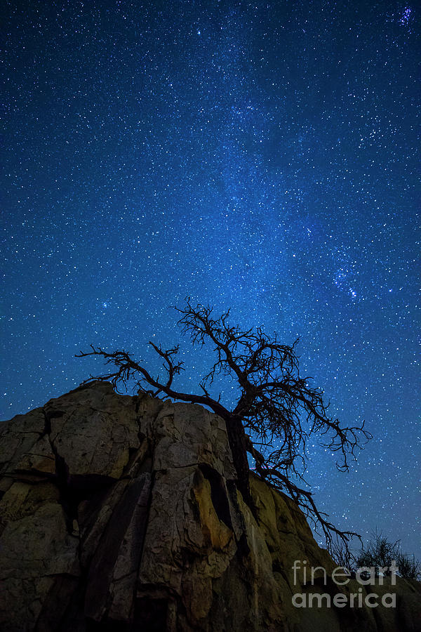 Winter in the Desert by Photography by Laura Lee