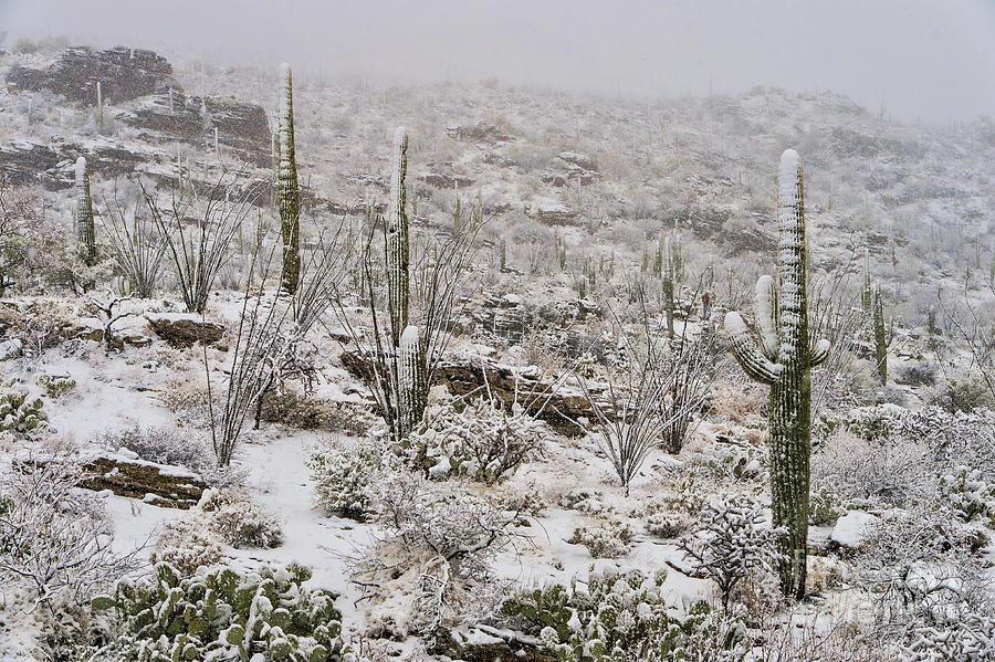 Southwest Photograph - Winter In The Desert by Sandra Bronstein