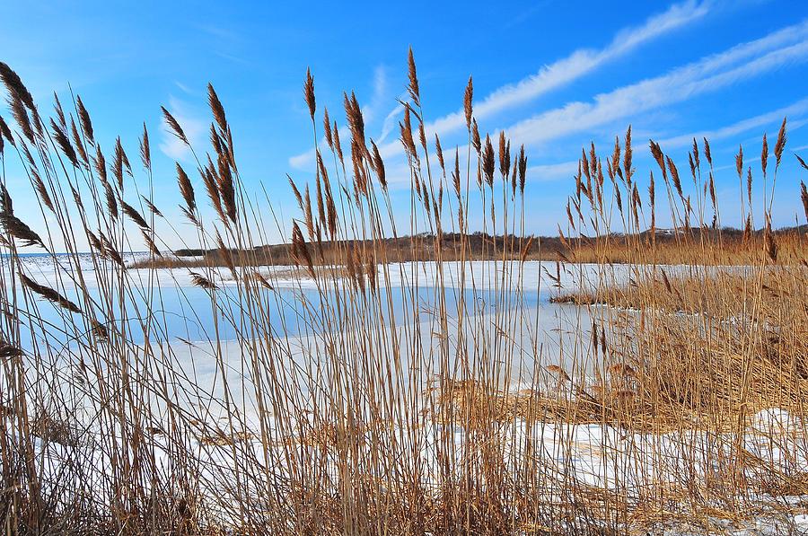 Rhode Island Photograph - Winter In The Salt Marsh by Catherine Reusch Daley