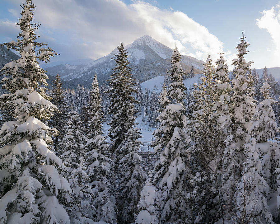 Winter In The Wasatch Photograph