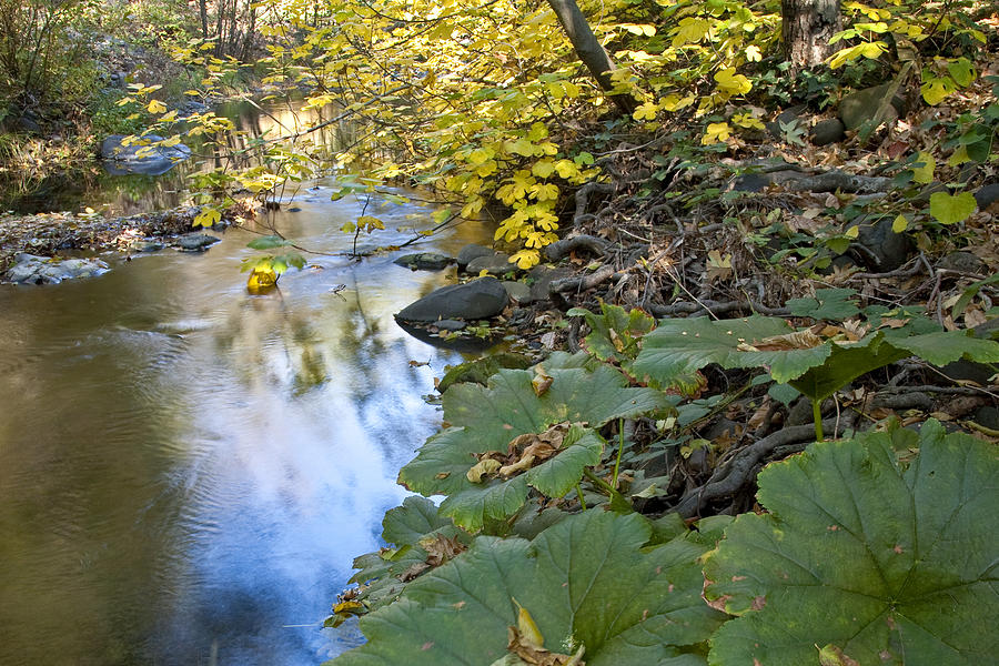 Landscape Photograph - Winter Is Coming On Rock Creek by Charlie Osborn